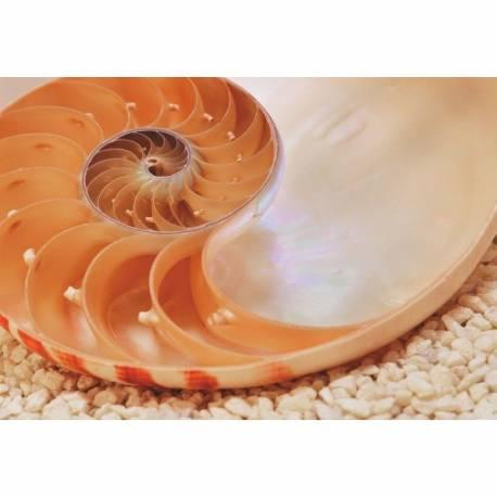 Фототапет Nautilus, 1 част, 184х127 см