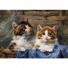 Картина Zwei Katzen - Julius Adam, 35x50 см