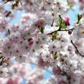 Фототапет Spring, 8 части, 368х254 см
