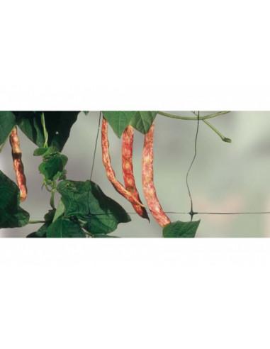 Мрежа за увивни растения Tenax Flora, 2x10 м