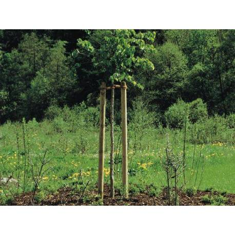 Дървен кол за градина  6 x 200 см