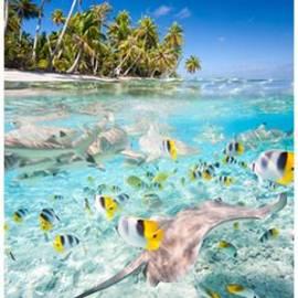 Инфрачервен нагревател - 400W, тип картина Тропически риби